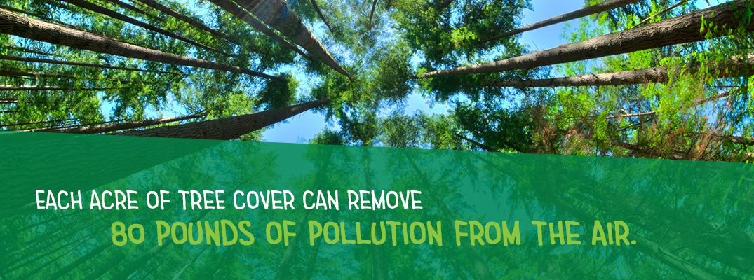 Trees Remove Pollution From The Air