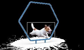 Dog Single Hoop
