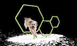 Dog Triple Hoops